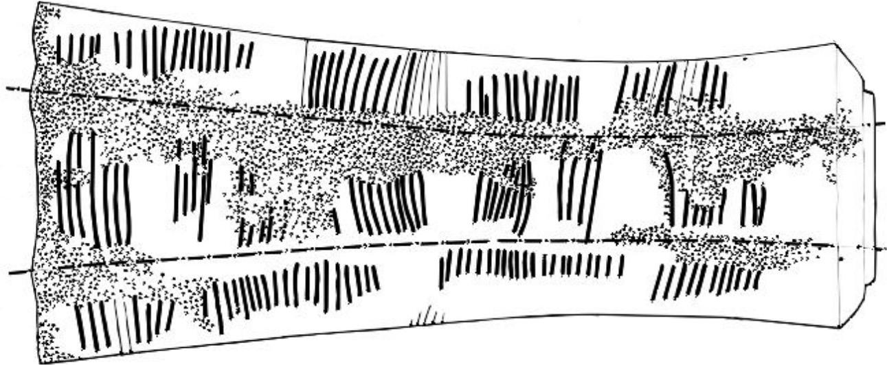 Figure 1.1: Markings on the Ishango Bone
